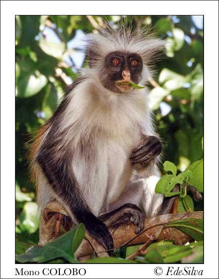 Animales en peligro de extincion!