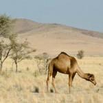 VIAJANDO POR NAMIBIA – 7/8/2003 – Del desierto de Namib a la costa del atlántico con destino a Swakopmund